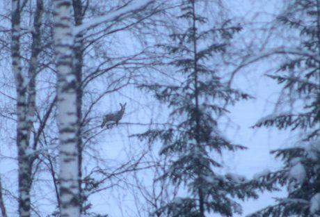 Deer in a snowy field.
